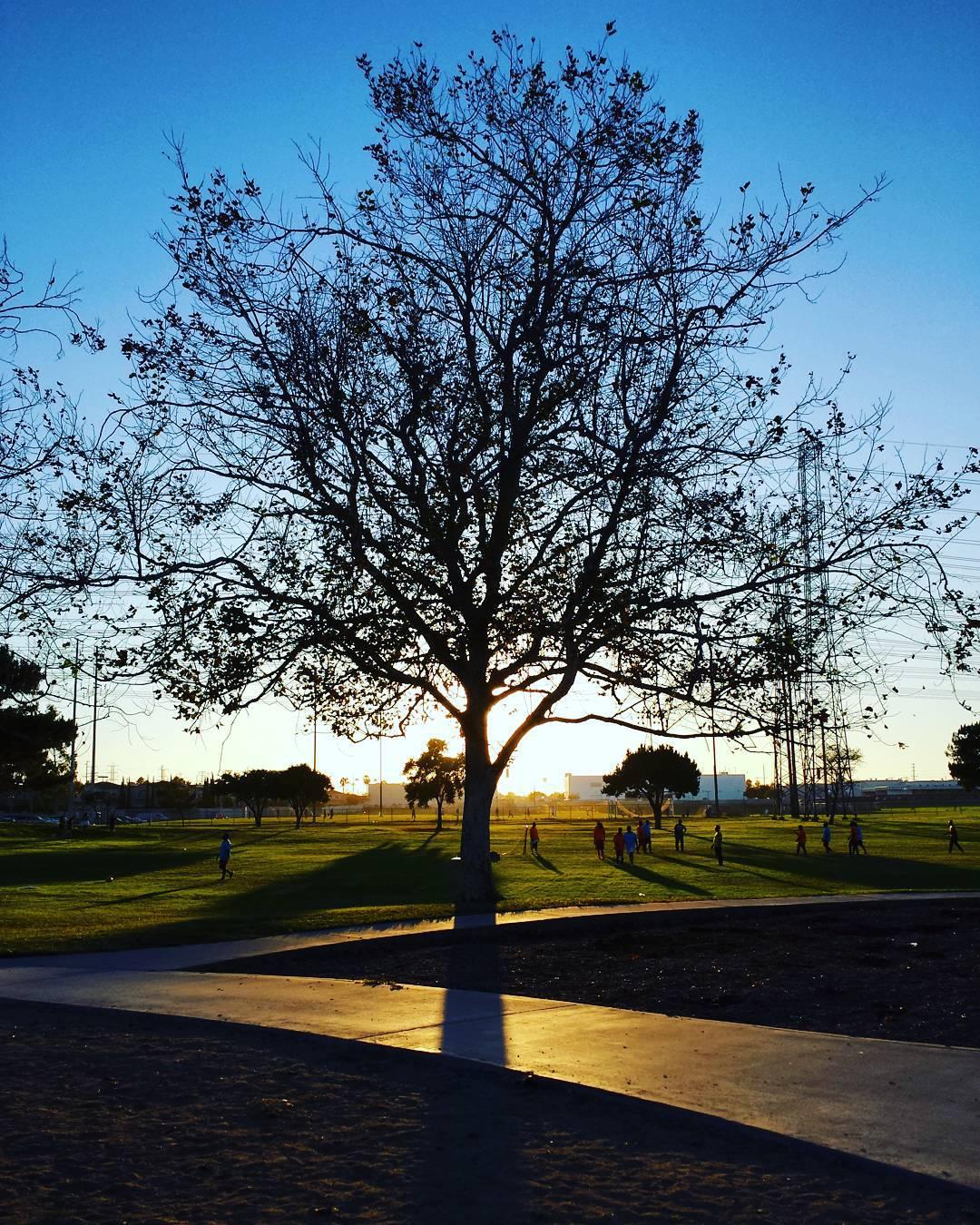 Tree at sunset.  #silhouette #tree #sunset