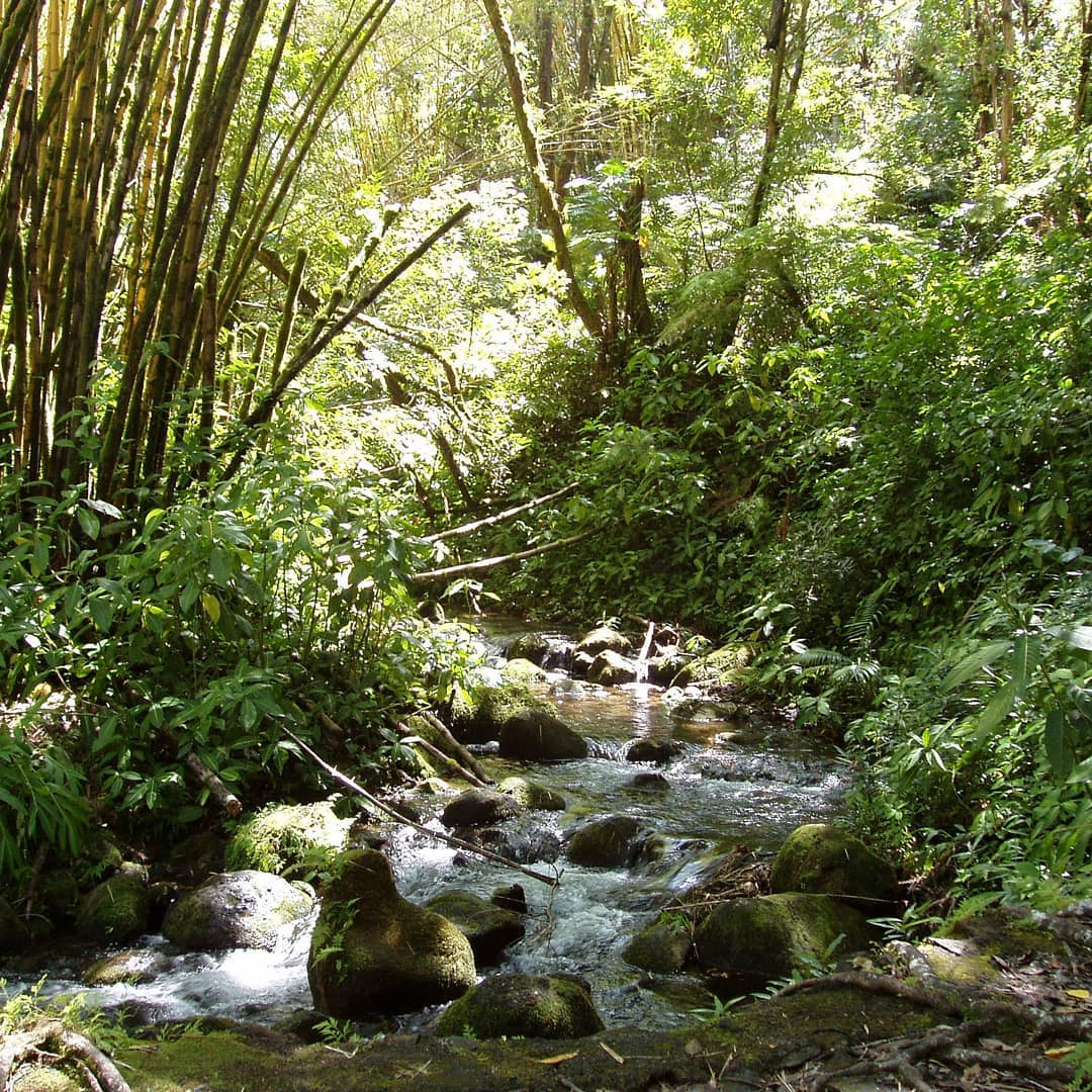 Flashback: A in, somewhere along the trail to the 420-ft Akaka Falls on the Big Island. I've been digging out the originals of photos I posted in low resolution back in the day. This seemed like a good one for #🌎