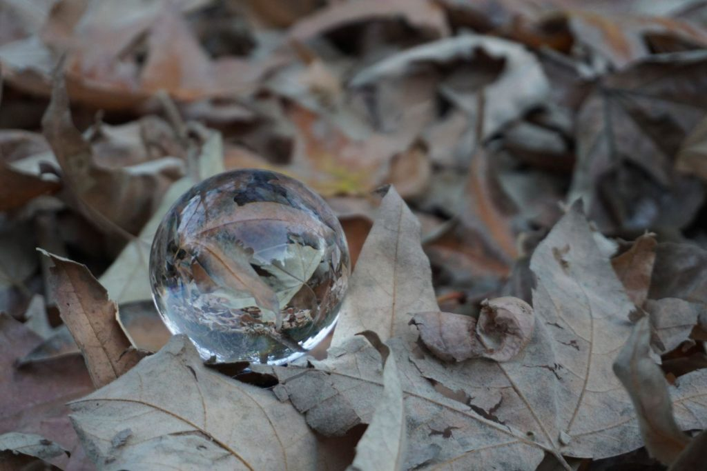 A clear glass ball refracting a carpet of dried leaves.