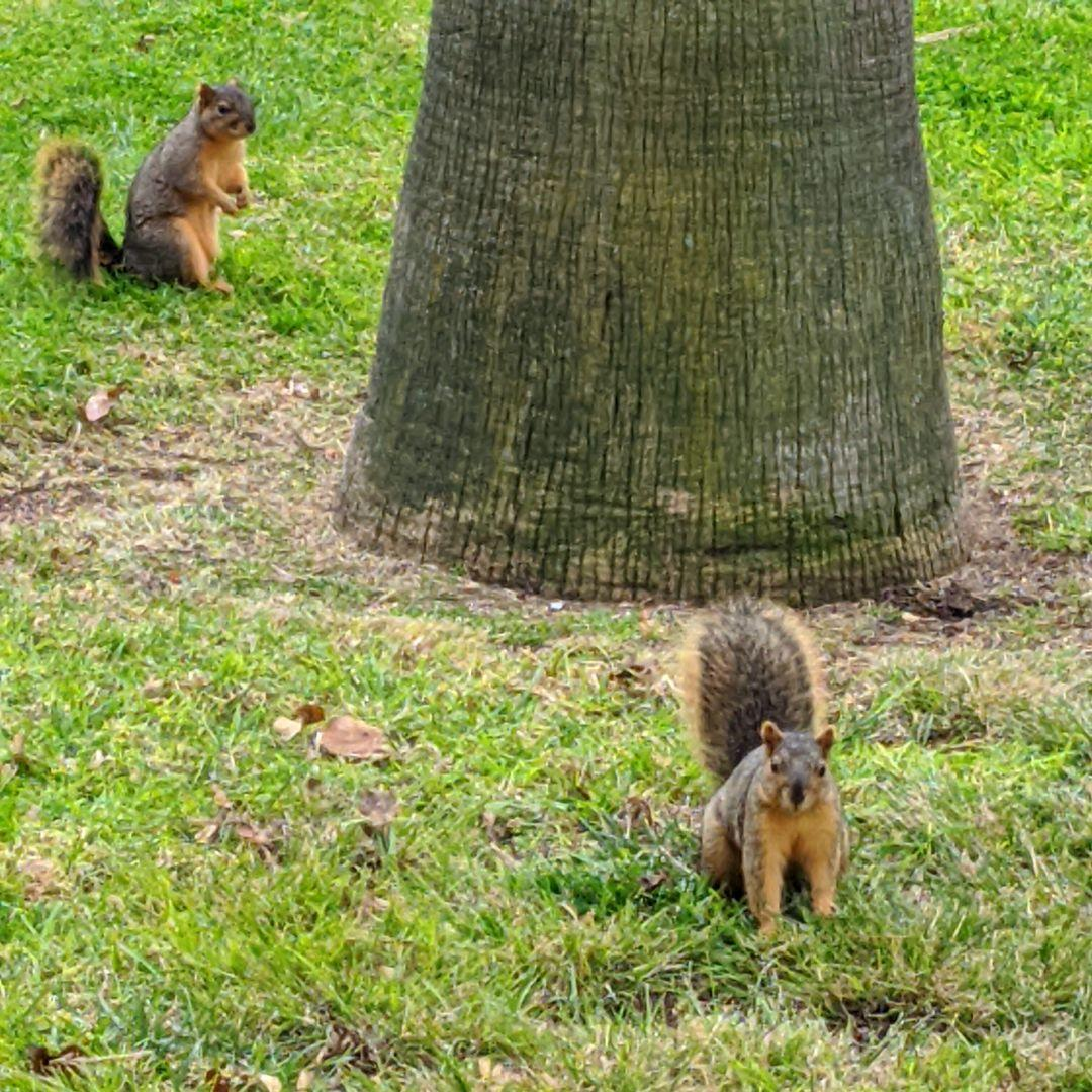Still squirrelly. #squirrels