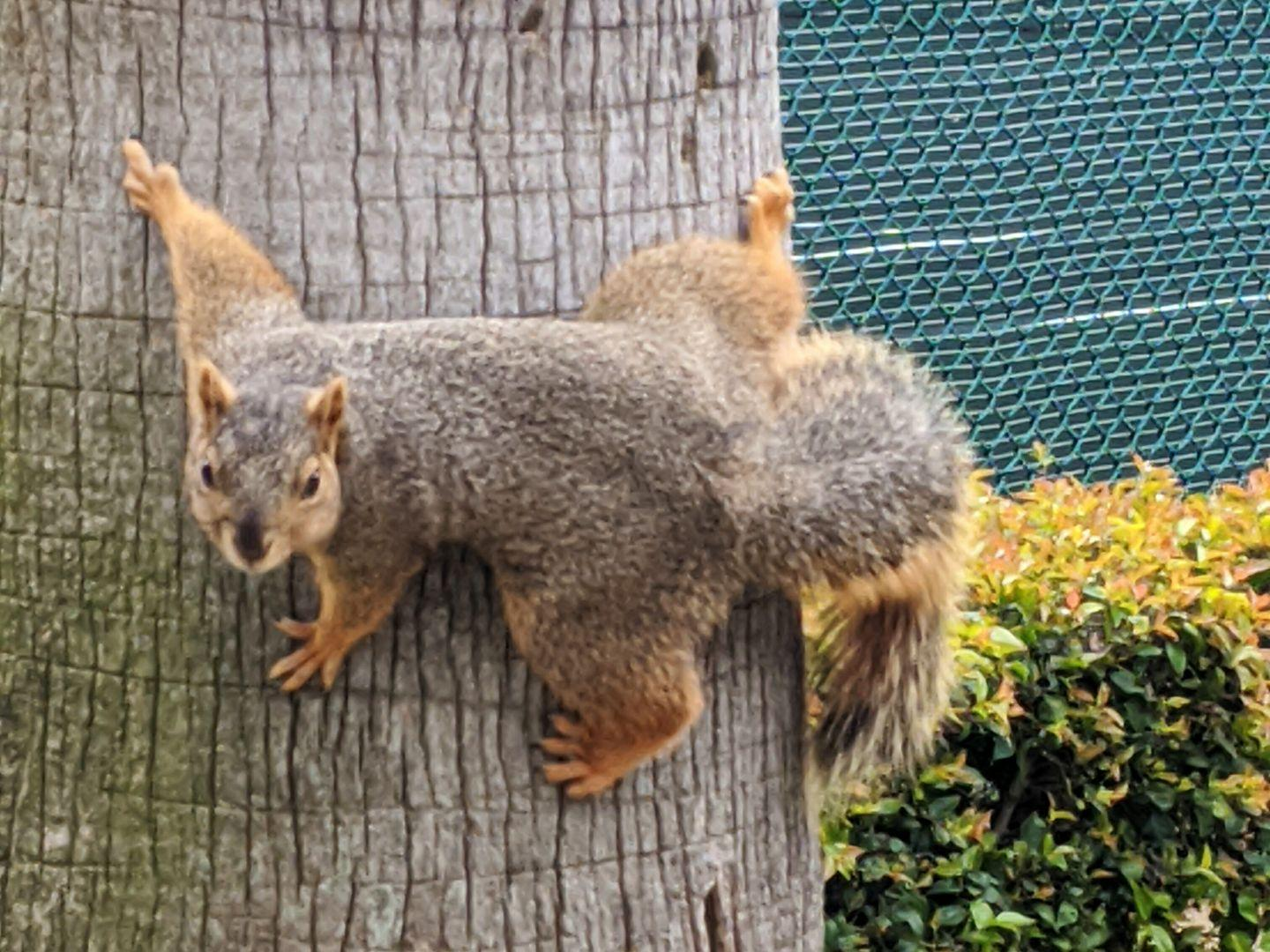 """""""Yeah, I see you, camera guy. You gonna try something?"""" #squirrels"""