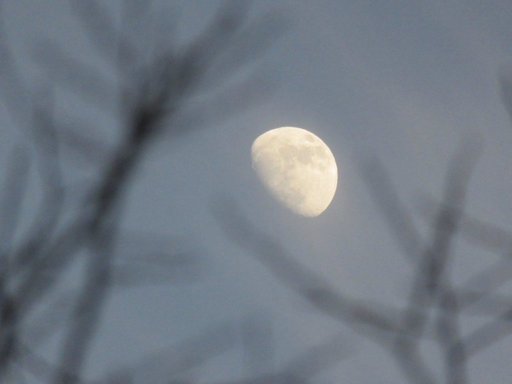 Moon surrounded by blurry bare branches.