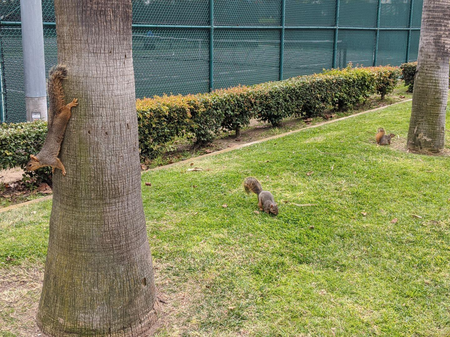 Trio of #squirrels in the park.