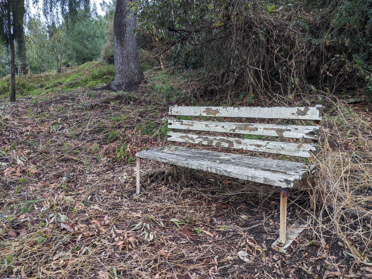 I keep taking pictures of benches here for some reason.#photo #bench