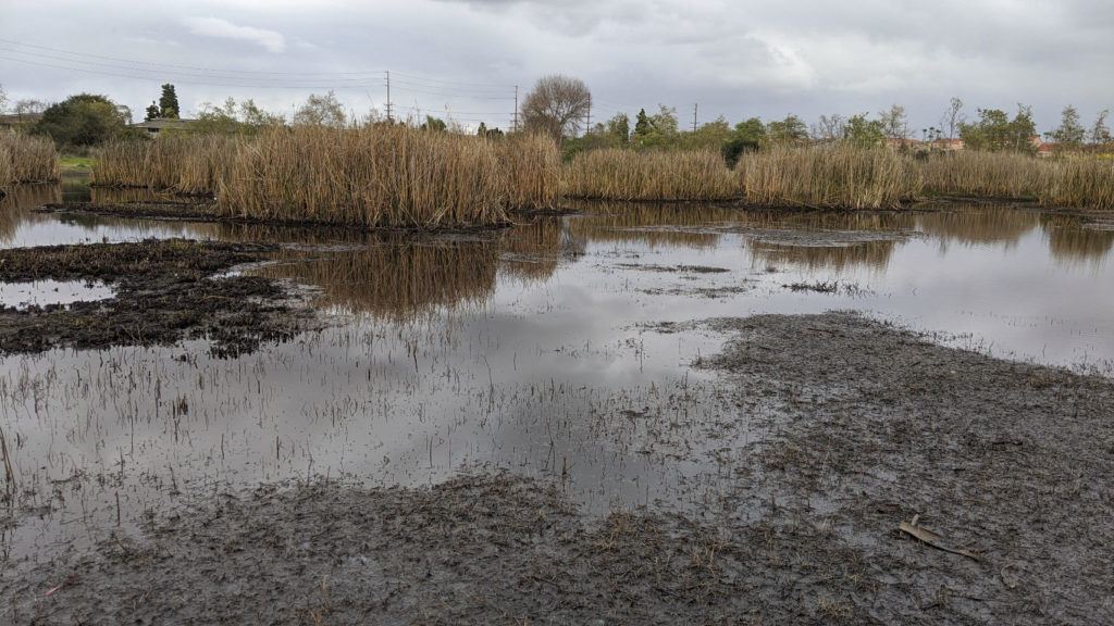 Mud flats and water, with dead-looking reeds in the distance.