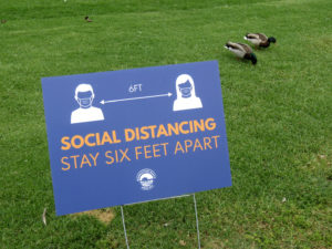 Social distancing sign and two ducks that are right next to each other.