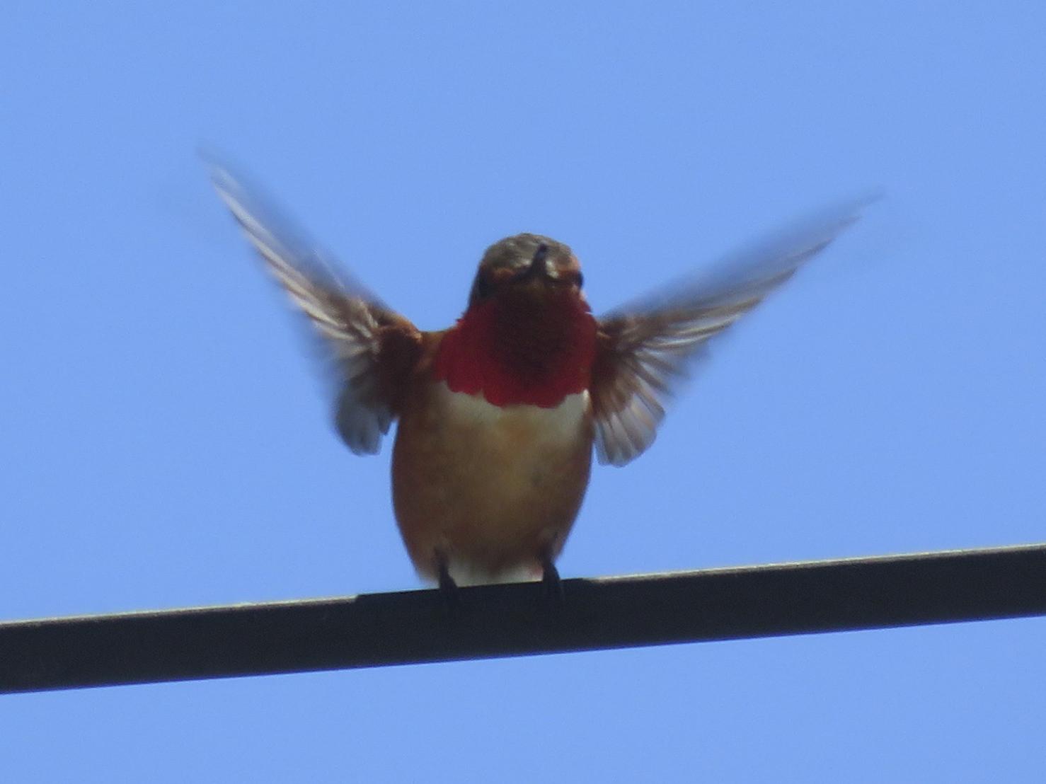 kelsonv: Flappy bird?