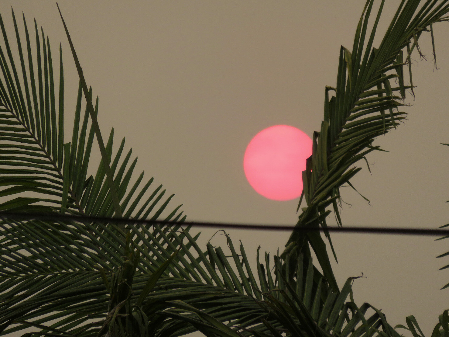 "kelsonv: ""Smoky sun, late afternoon.…"""