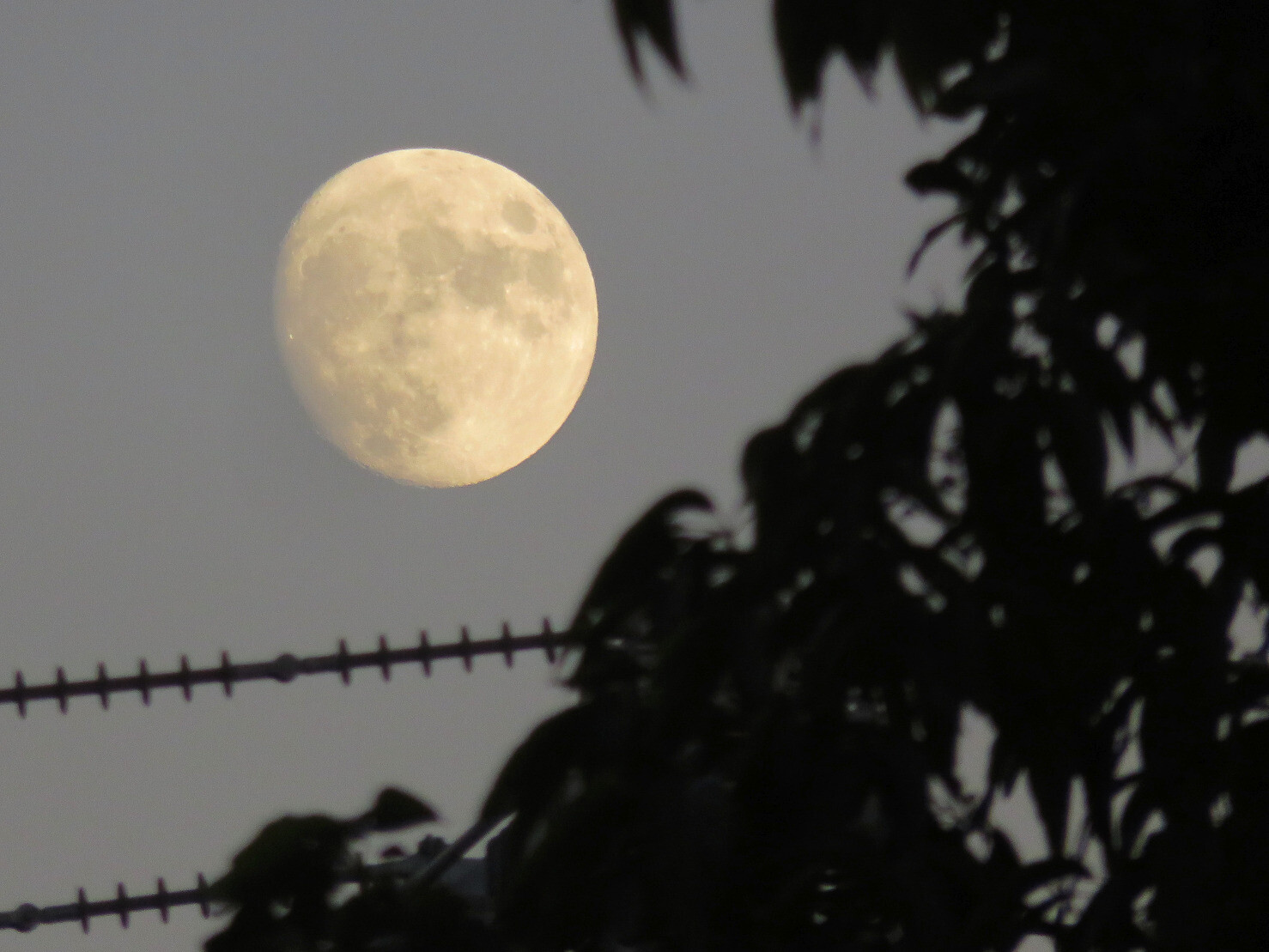 "kelsonv: ""Yesterday evening's #moon …"""