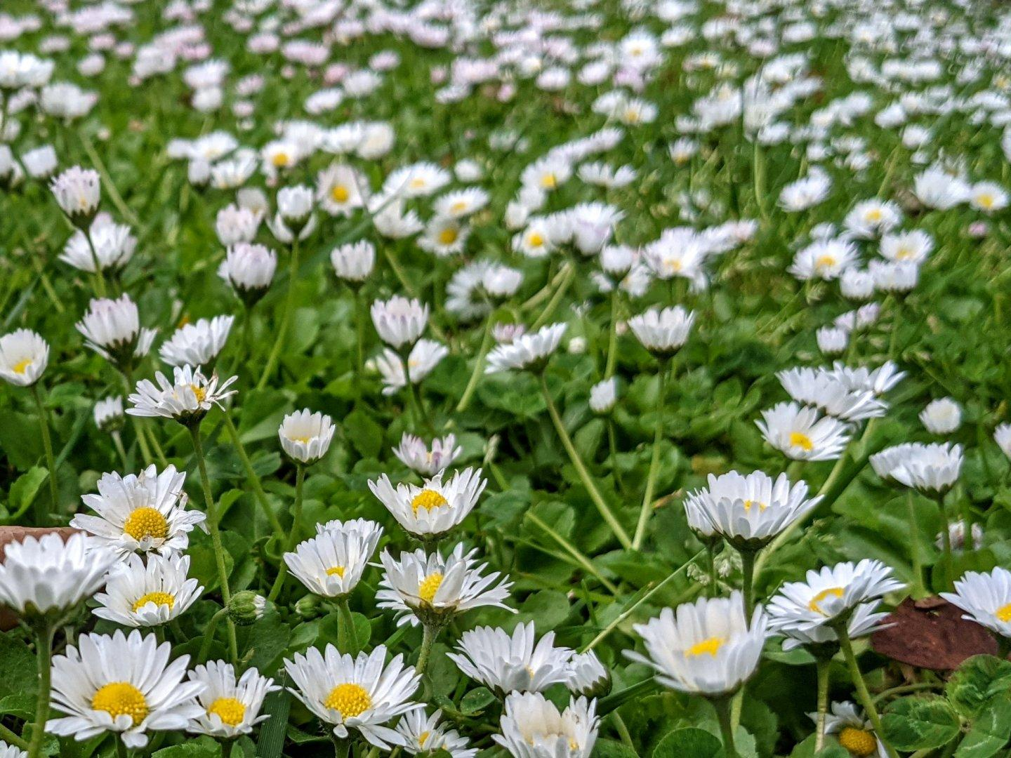 Earth, daisies.