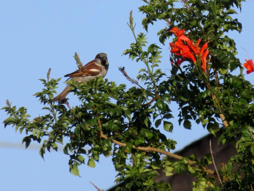 A small brown white and black bird perched on the end of a narrow tree branch with green leaves and bright red-orange flowers.
