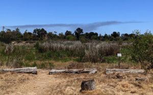Dry marsh and smoke.