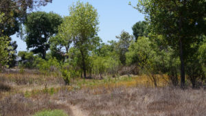 Trees and dry grass.