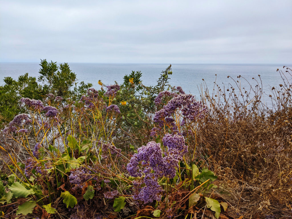 Lacy purple flowers, small yellow ones, broad and narrow green leaves, and brown dried flower stalks with the ocean and a gloomy sky in the distance.