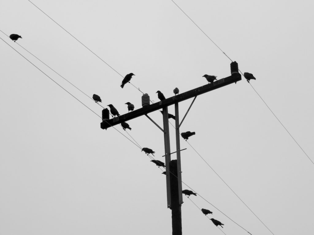 A telephone pole with at least 15 crows perched on the cross piece and wires, seen from below with the wires and crosspiece forming diagonals.