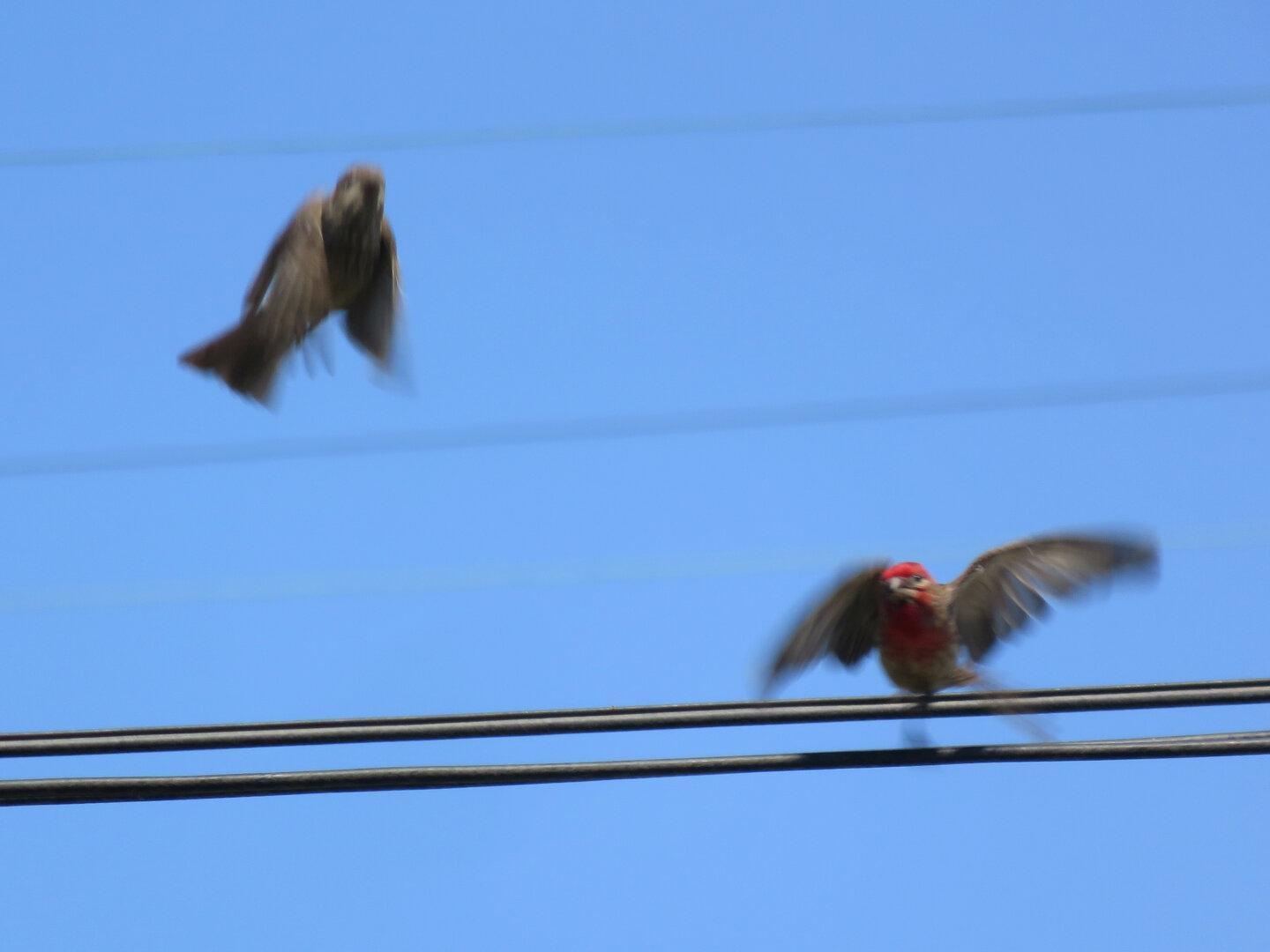 Flapping Finches