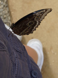 Looking down at a large brown and white butterfly with lots of circles on its wings perched on a pant leg. The rest of my leg and shoe are blurry in the background.